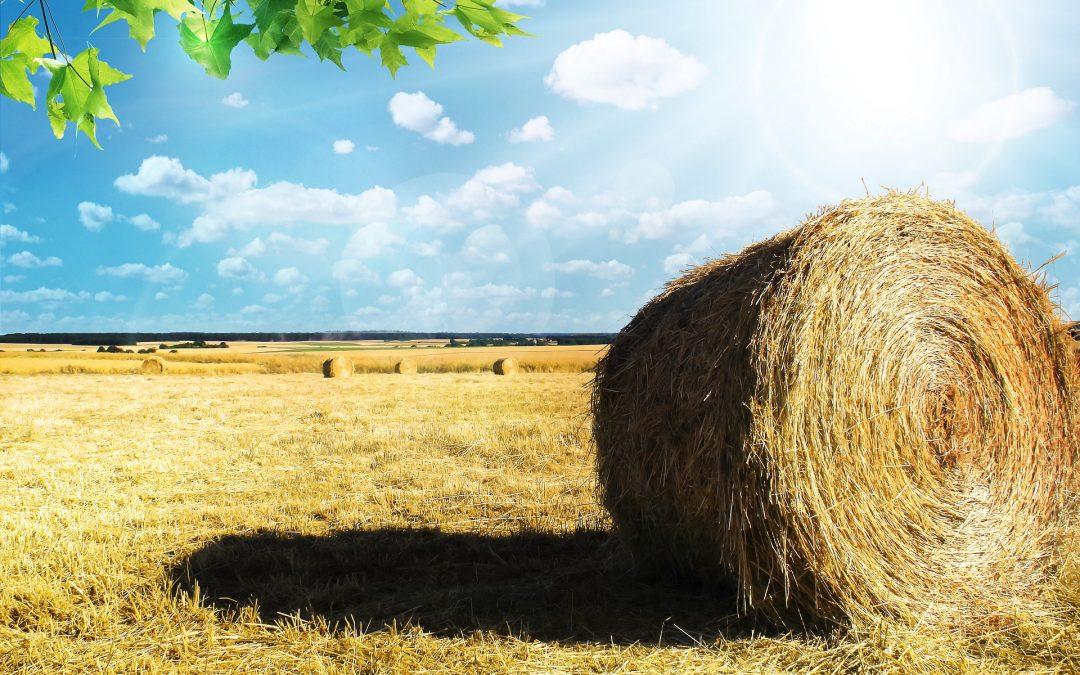 60 tys. na restrukturyzację małego gospodarstwa… ARiMR ogłosiła już datę rozpoczęcia naboru.