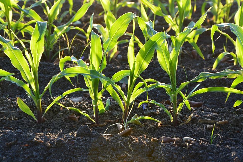 Nabór na inwestycje zapobiegające zniszczeniu potencjału produkcji rolnej