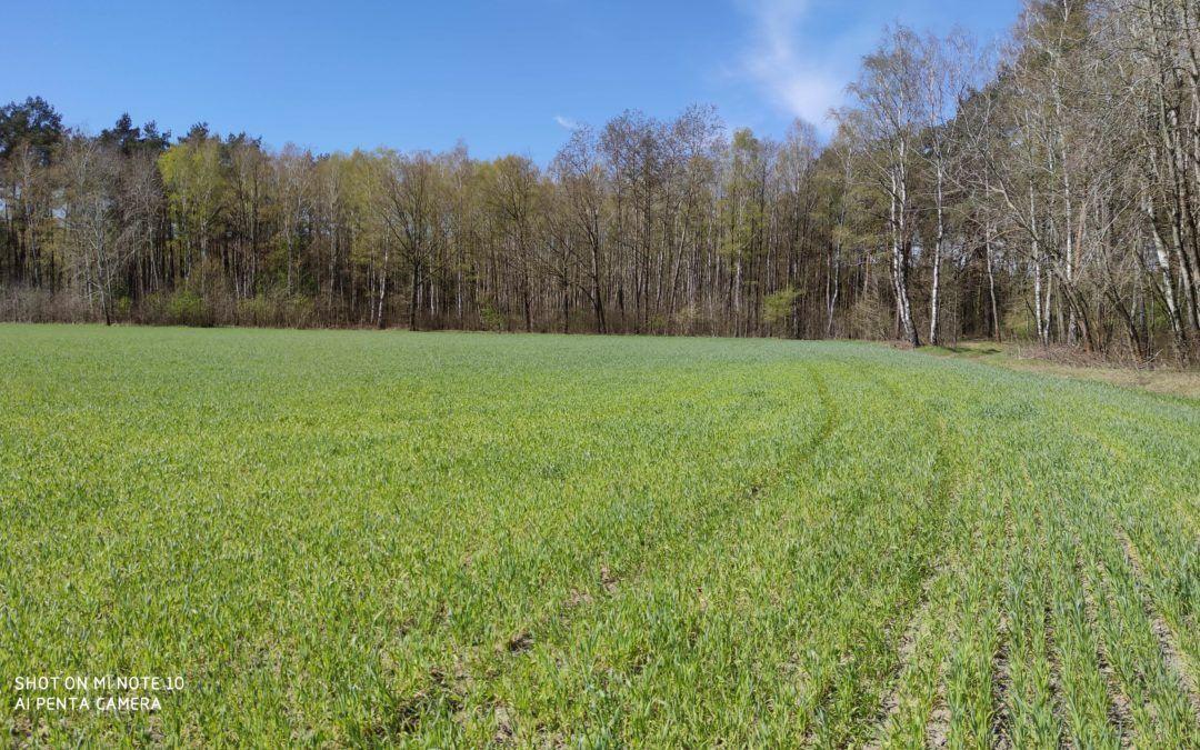 Rolnictwo ekologiczne – czy warto?